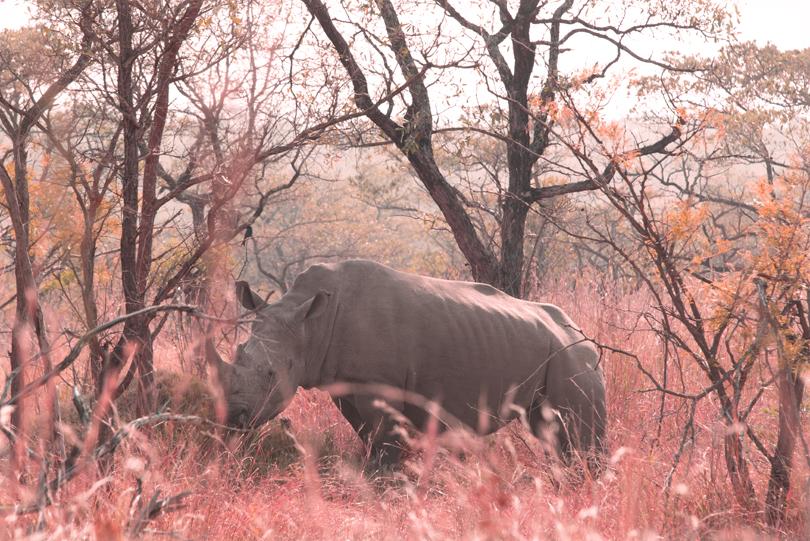 74-SouthAfricaRhino